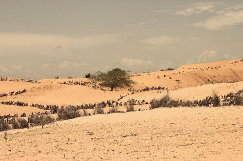 2806-1004-600-migrants-clandestins-sauves-dans-le-desert-nigerien-selon-l-oim_L.jpg